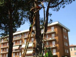 Ramo di pino pericolante a Ponte San Giovanni, intervengono i Vigili del Fuoco