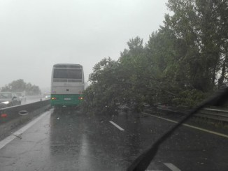 Maltempo Umbria, albero si schianta sulla E45, nessun ferito