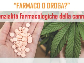 Cannabis terapeutica, farmaco o droga? Un convegno a Perugia