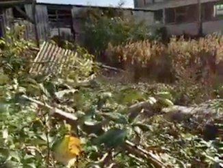 Ambiente, Camicia, discariche nelle periferie, guardie ecologiche in città pronte a multare