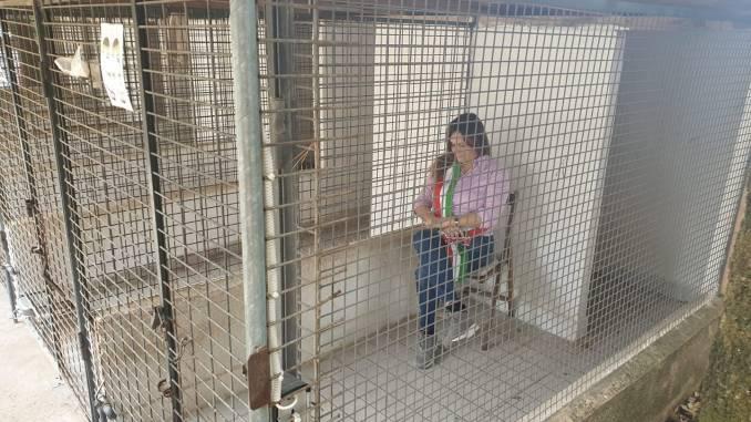 Sindaco di Montefranco si chiude in gabbia per difendere i cani