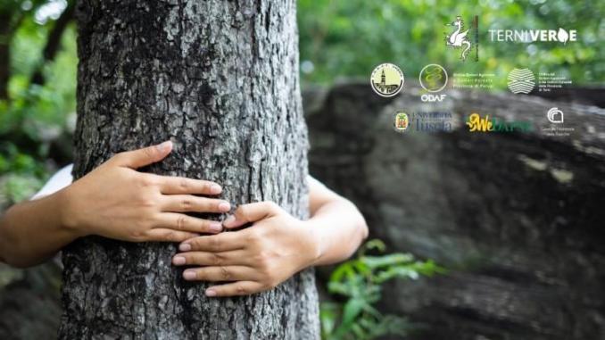 Come gestire gli alberi in città, un convegno giovedì al Caos
