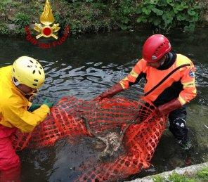 Due caprioli morti trovati nel fiume Menotre, recuperati dai vigili del fuoco