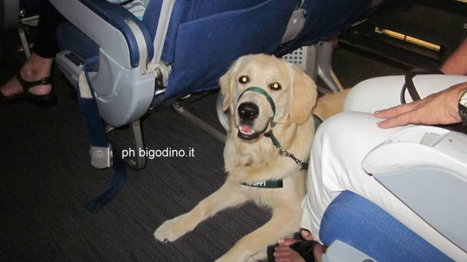 Tempo di vacanze all'aeroportoSant'Egidio non c'è posto per Fido