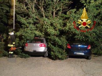 Rami caduti su delle macchine parcheggiate, è successo a Foligno