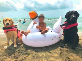 Bimbo di 7 anni rischia di affogare, salvato da due cani