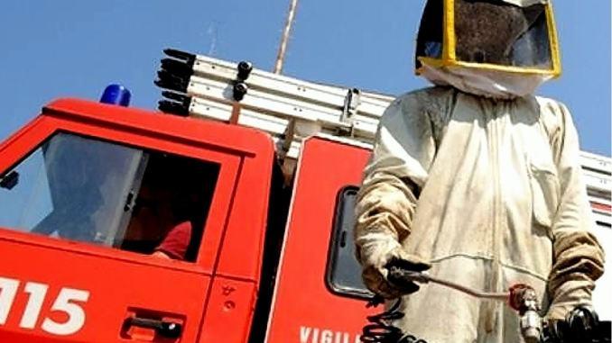 Vespe calabroni e api avranno vita dura, ora ci sono i Vigli del fuoco