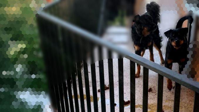 Cani lasciati soli i mezzo allo sterco a Fontivegge, protesta dei residenti