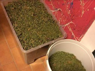 Aveva oltre 2 chili e mezzo di marijuana 9000 dosi di stupefacente