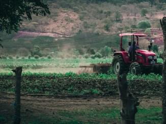 Crisi agricoltura da Covid19, Nevi, FI, valorizzare settore tabacchicoltura