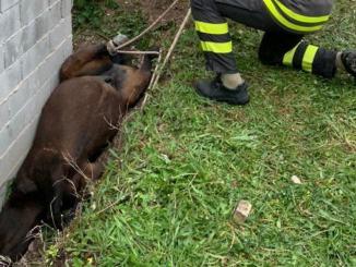 Cavallo scivola nel fossato a Nocera umbra, ferito lievemente
