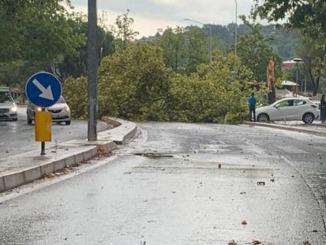 Temporale Umbria, danni e disagi, alberi sradicati, treni bloccati, aeroporto chiuso