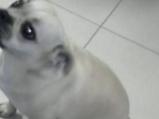 Il cucciolo che voleva prendere il treno per Perugia, una storia a lieto fine