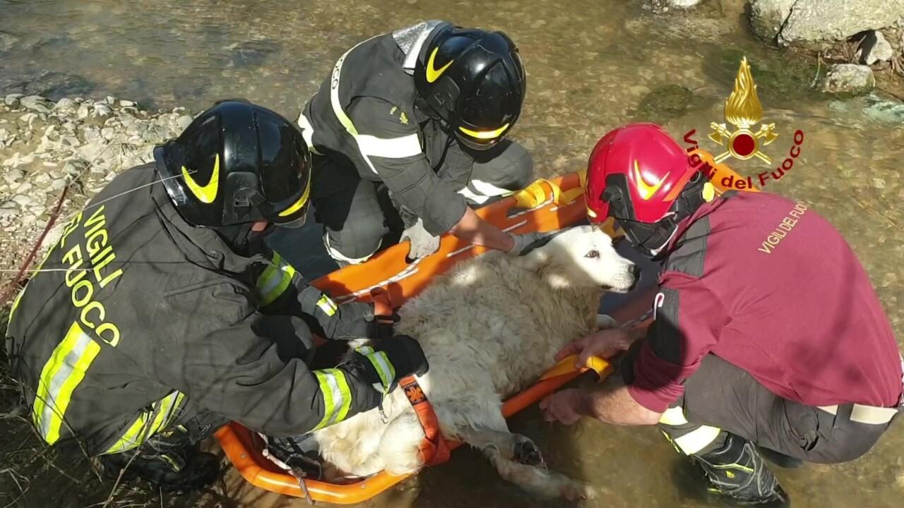 Cane maremmano di 11 anni finisce in un fosso, ferito