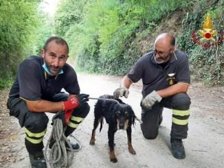 Cane spericolato finisce nel fiume Nera, salvato dai vigili del fuoco