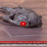 Nel sottopassaggio di via Patrono d'Italia un topo morto e degrado