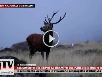 Nono censimento del cervo al bramito nel Parco dei Sibillini