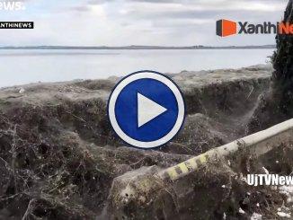 Grecia, video della ragnatela enorme che ricopre strade e vegetazione a Xanthi