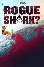 Rogue Shark?