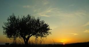 Sobre la aparición de Dajjal, el Anticristo