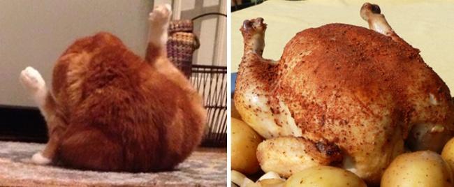 Coisas inesperadas que são incrivelmente semelhantes