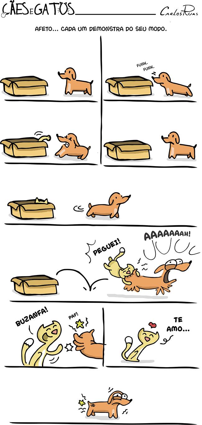 Cães e Gatos – Afeto, cada um demonstra do seu modo