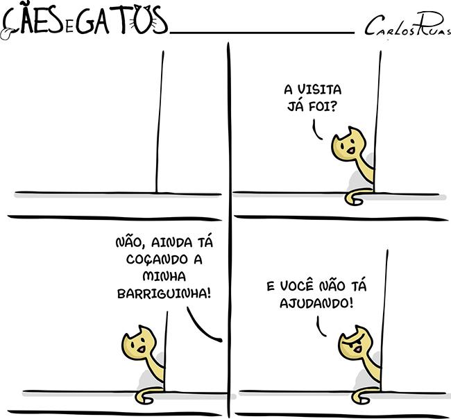 Cães e Gatos – Visita