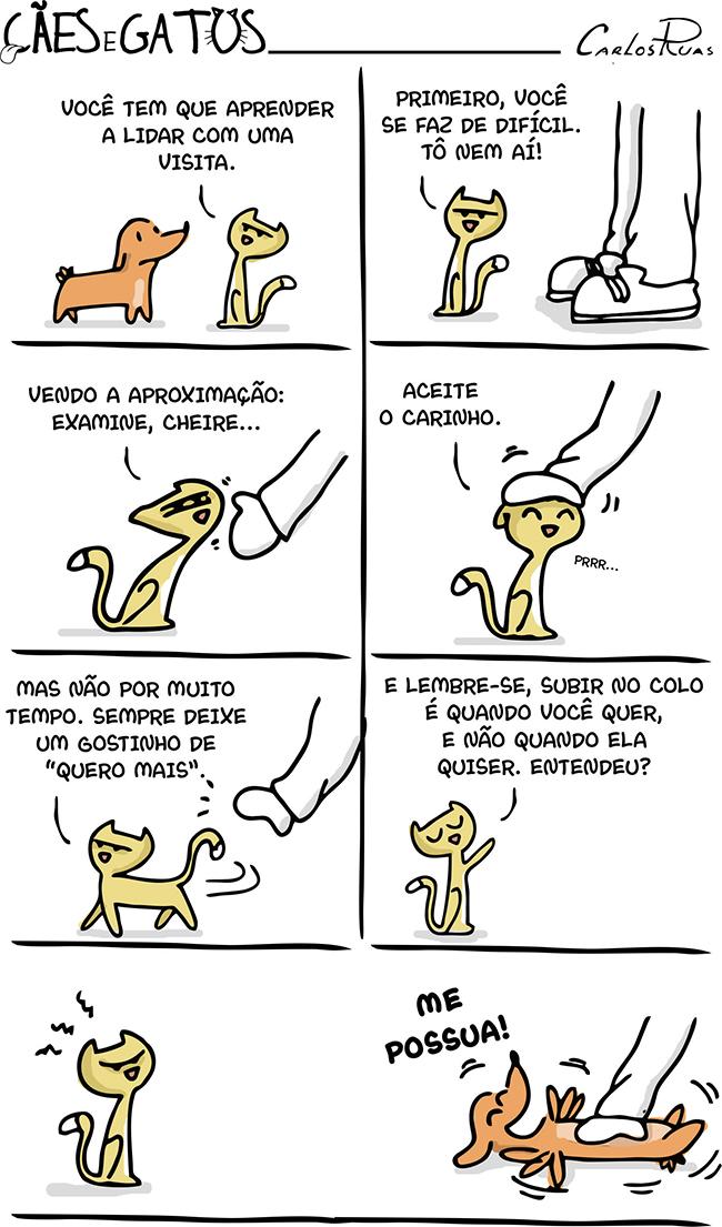 Cães e Gatos – Visita 2