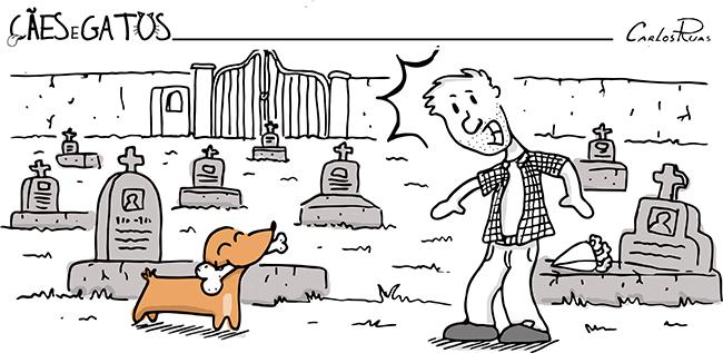 Cães e gatos – Sou um bom Cão!