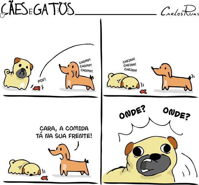 Cães e gatos – Onde? Onde?