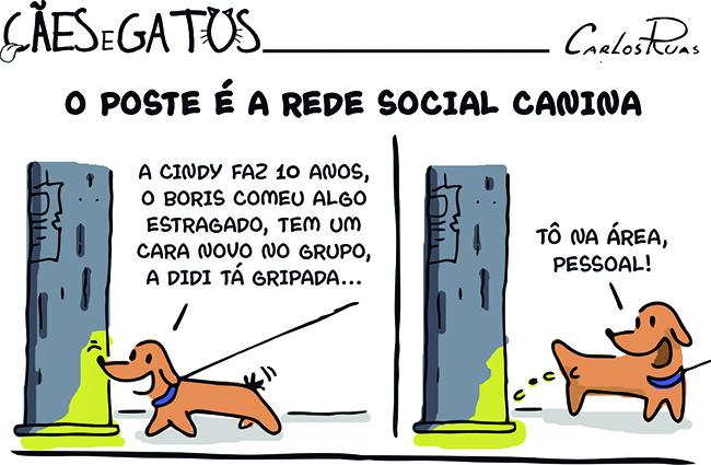 Cães e Gatos – O poste é a rede social canina