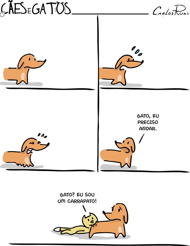 Cães e Gatos – Carrapato