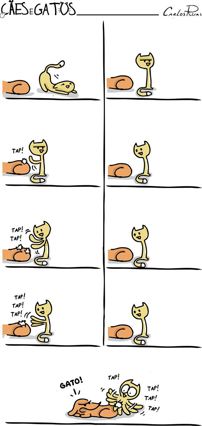Cães e Gatos – Tap!