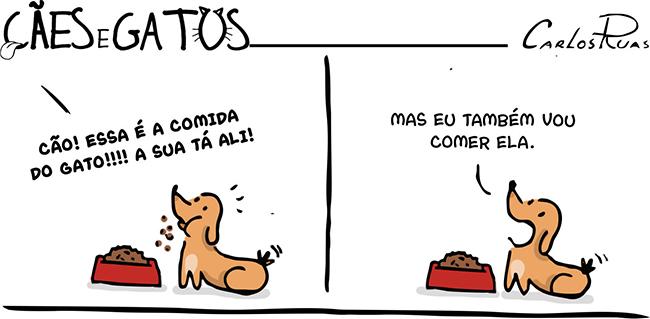 Cães  Gatos – Qual o problema?