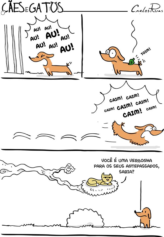 Cães e gatos – Vergonha
