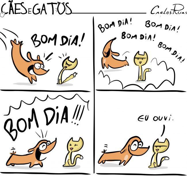 Cães e gatos: Existem dois tipos de pessoas…