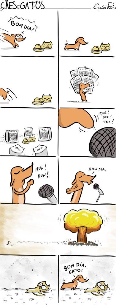 Cães e gatos – Bom dia