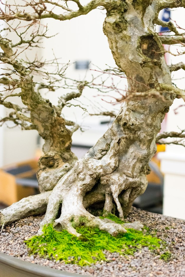 A bonsai presentation in Mary Washington's Lee Hall last week served as an introduction to the new Zen garden by Trinkle Hall. Photo by Jarred Cannon.