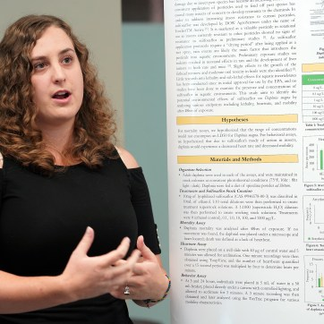 UMW student Mary Hoffman presents her project - The Impact of Sulfoxaflor on the Physiology, Pulmonary Function and Behavior of Daphnia magna. Photos by Suzanne Carr Rossi.