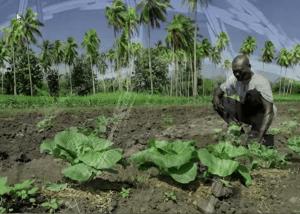 جزر سليمان: اجتثاث العنف ضدّ النساء