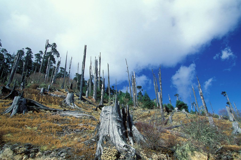 إزالة الغابات تؤثر بشكل مباشر على مناخ الكوكب وامداداته من المياه. من صور البنك الدولي/Curt Carnemark