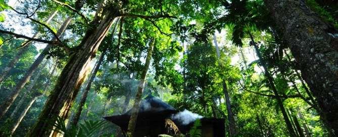 Damar bosque en Indonesia. Foto ONU/ Eva Fendiaspara