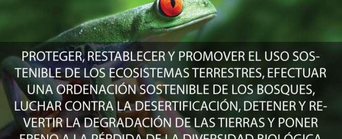 Objetivo 15: Proteger, restablecer y promover el uso sostenible de los ecosistemas terrestres, efectuar una ordenación sostenible de los bosques, luchar contra la desertificación, detener y revertir la degradación de las tierras y poner freno a la pérdida de la diversidad biológica. Foto ONU