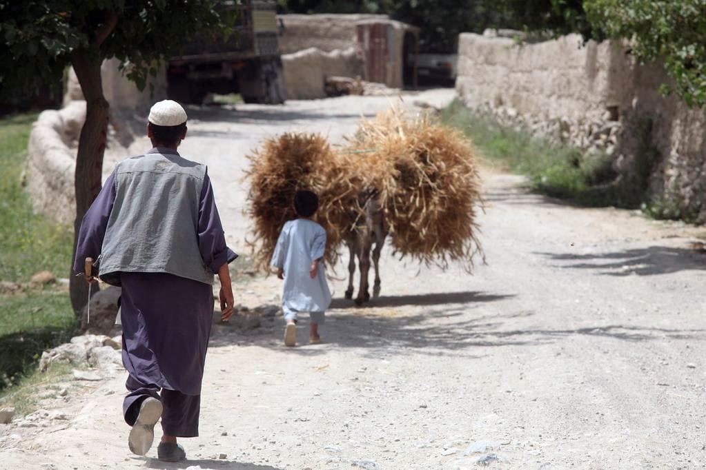Un granjero afgano y su hijo acarrean trigo. Foto FAO/Giuilio Napolitano