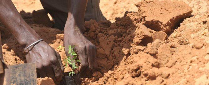 Un agricultor siembra semillas de acacias en Liguere, Senegal. Foto: FAO/Seyllou Diallo