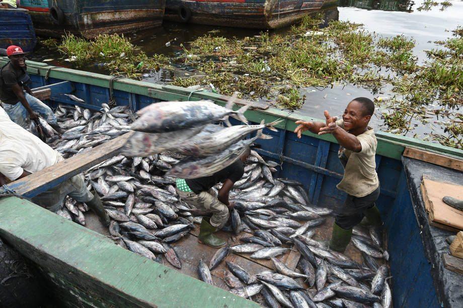 Des pêcheurs déchargent des thons au port de pêche industrielle d'Abidjan, en Côte d'Ivoire. Photo: FAO / Sia Kambou