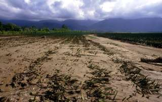 Photo: Climate change has serious implications for agriculture and food security.