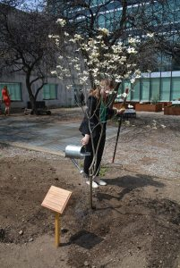Photo: A tree is planted in the UN Food Garden, 22 April 2016.
