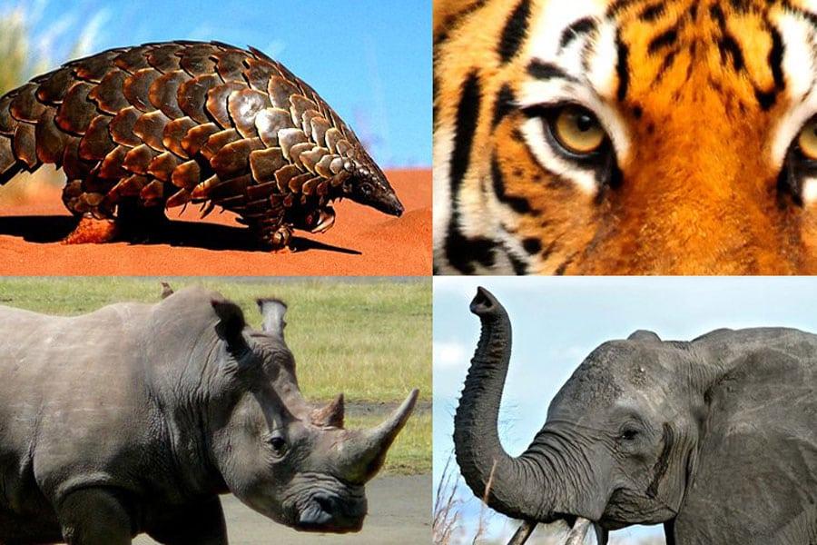 Photo: Wildlife. Credit: UNODC