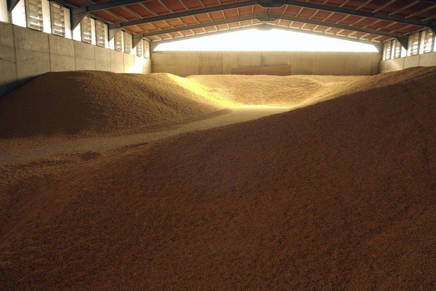 Photo: Maize stored for livestock consumption near Rome, Italy. Photo: FAO/Ivo Balderi